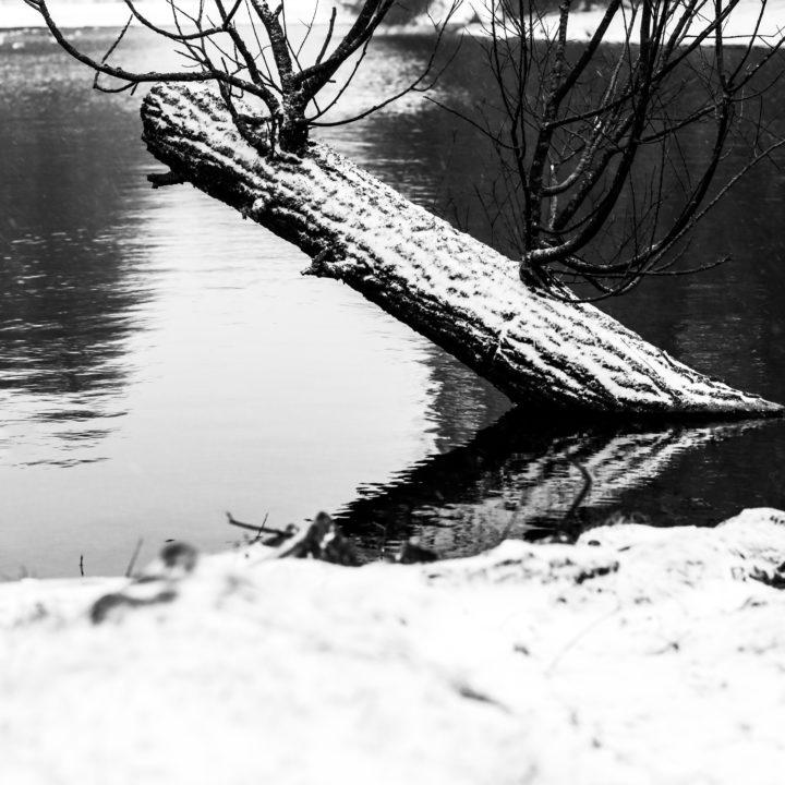 Serie #WinterJoy of Sunday Februari 7th 2021 (GroningenCityCentre/Noorderplantsoen) by DillenvanderMolen @MrOfColorsPhotography #MrOfColorsPhotography